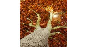 Фотоoбои Осень 25