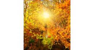 Фотоoбои Осень 27