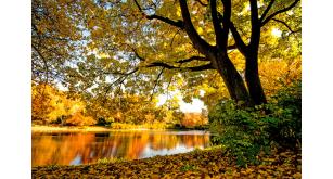 Фотоoбои Осень 28