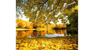 Фотоoбои Осень 29