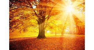 Фотоoбои Осень 3