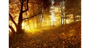 Фотоoбои Осень 30