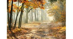 Фотоoбои Осень 32