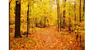 Фотоoбои Осень 33