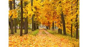 Фотоoбои Осень 34