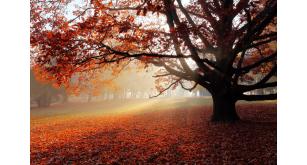 Фотоoбои Осень 35
