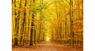 Фотоoбои Осень 36