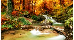 Фотоoбои Осень 37