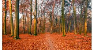 Фотоoбои Осень 39