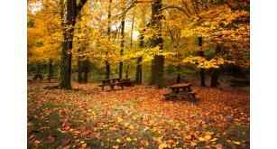 Фотоoбои Осень 4