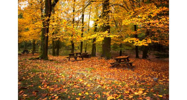 Осень 4