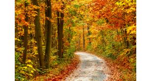 Фотоoбои Осень 40