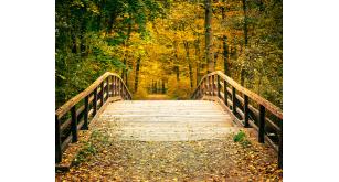 Фотоoбои Осень 41