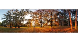 Фотоoбои Осень 42
