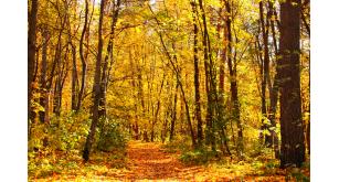 Фотоoбои Осень 43
