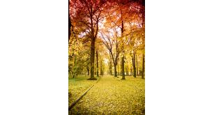 Фотоoбои Осень 44