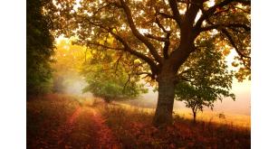 Фотоoбои Осень 45