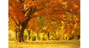 Фотоoбои Осень 46
