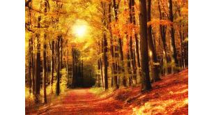 Фотоoбои Осень 48