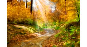 Фотоoбои Осень 5