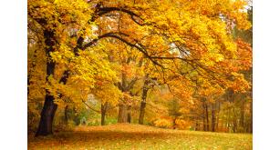 Фотоoбои Осень 6