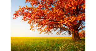 Фотоoбои Осень 7