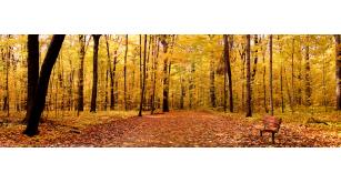 Фотоoбои Осень 8
