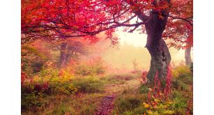 Фотоoбои Осень 9