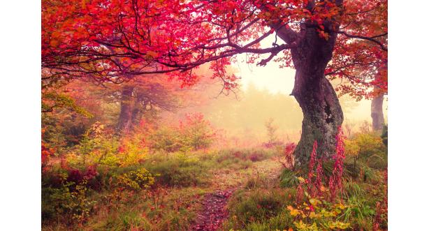 Осень 9