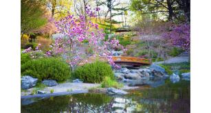 Фотоoбои Парки и сады 115