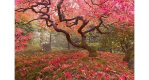 Фотоoбои Парки и сады 37