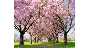 Фотоoбои Парки и сады 52