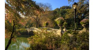 Парки и сады 73