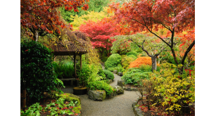 Фотоoбои Парки и сады 93