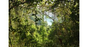 Фотоoбои Природа 147