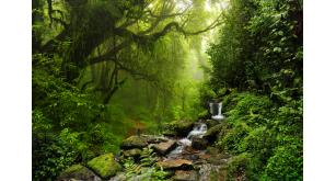 Фотоoбои Водопады 27