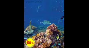 Фотообои - Подводный мир