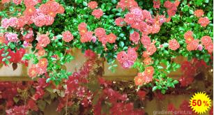 Фотообои - Вьющиеся розы